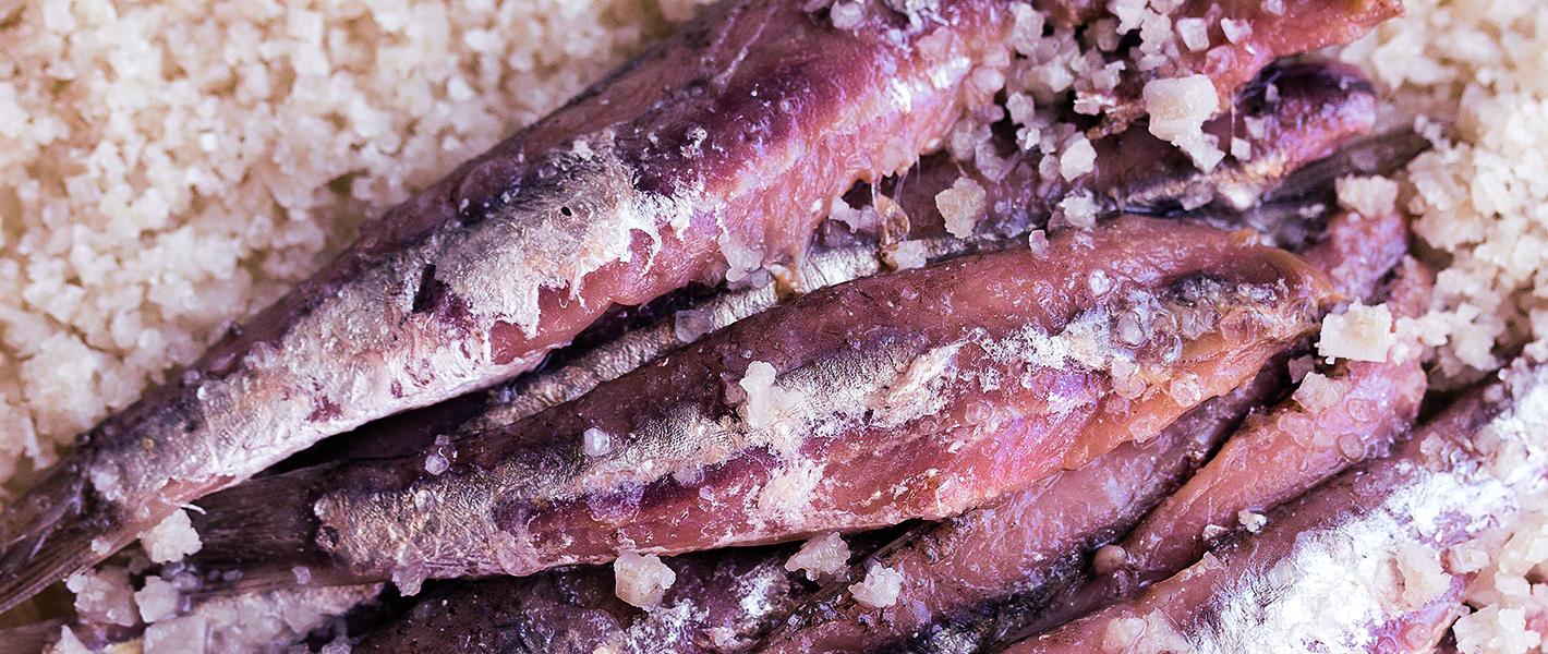 Les métiers de la CITPPM : semi-conserves d'anchois